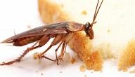 ما هي الحشرات الضارة والحشرات النافعة