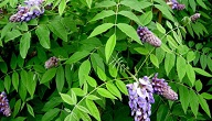 انواع النباتات واسمائها
