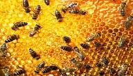 كيف تتخلص من خلية النحل
