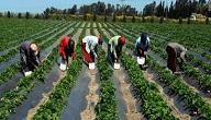 تعريف و مفهوم الزراعة