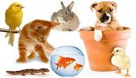 تربية الحيوانات الاليفة في المنزل