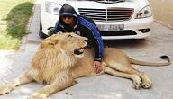 مفاهيم تربية الحيوانات المفترسة