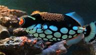 اسماك البحر الاحمر