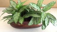 افضل النباتات المنزلية لتنقية الهواء