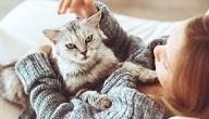ماهي فوائد و مضار تربية القطط