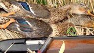 مهارات صيد الطيور
