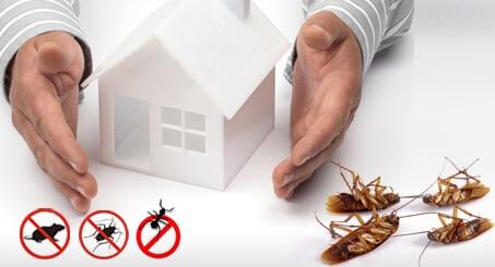 كيف اقضي على الحشرات في البيت