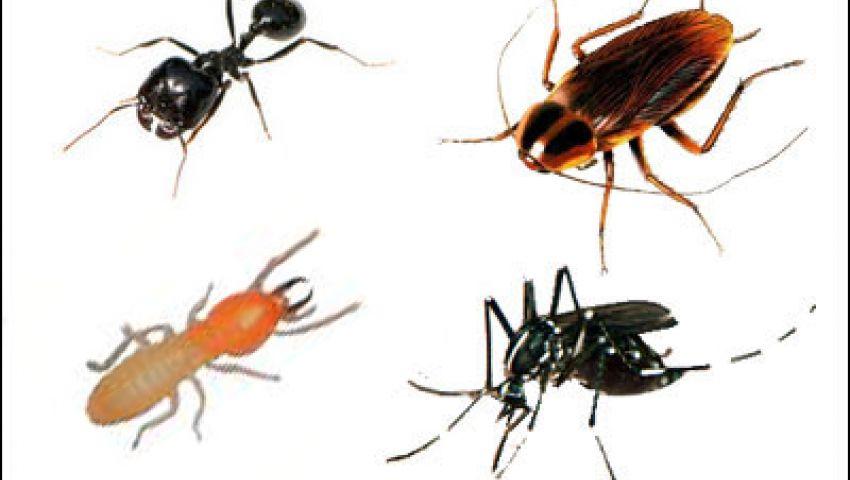كيفية التخلص من الحشرات الزاحفة في المنزل