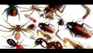القضاء على الحشرات نهائيا