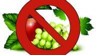 الفواكه الممنوعة للحامل