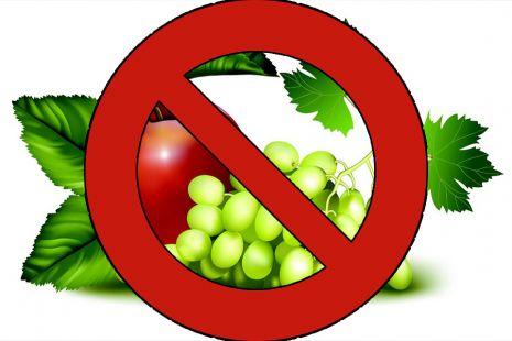 الفواكه الممنوعة للحامل مفهرس