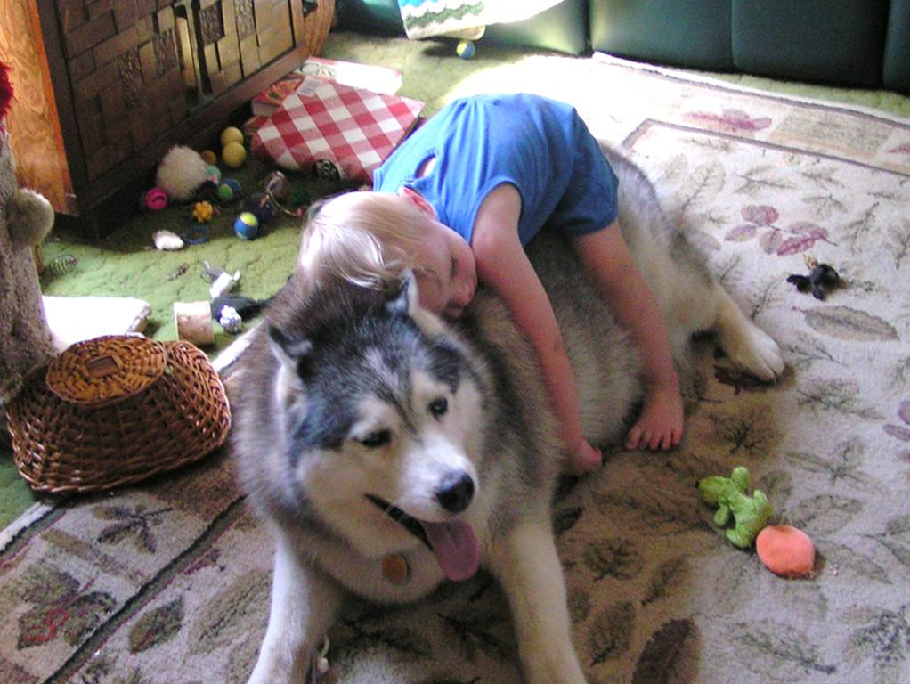 اضرار تربية الحيوانات الاليفة في المنزل