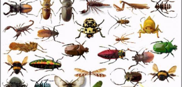 اسماء الحشرات