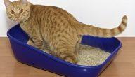 كيفية تربية القطط الصغيرة على الحمام