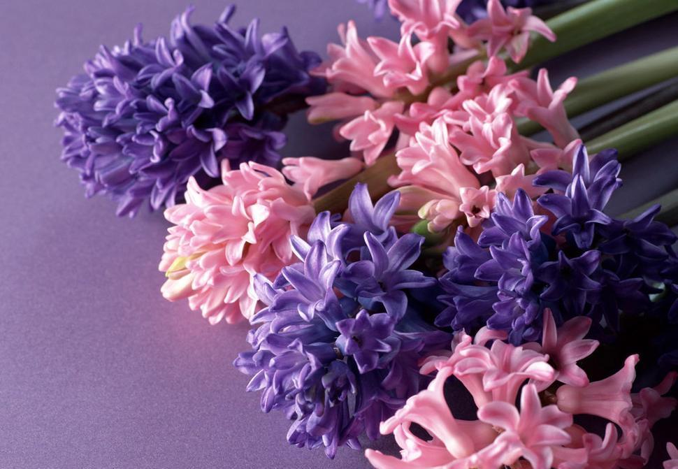 فوائد الازهار للانسان