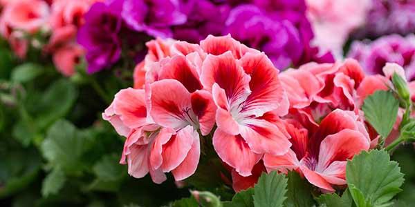 انواع النباتات الزهرية