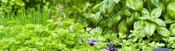 ماهي اسماء النباتات الطبيعية