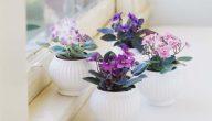 انواع النباتات المنزلية