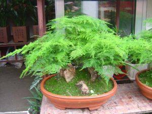 أنواع النباتات بالصور