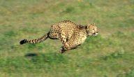 الحيوانات المفترسة في افريقيا