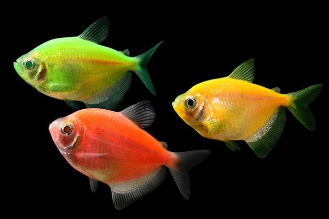 معلومات عن الاسماك للاطفال