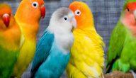 افضل انواع الطيور للتربية المنزلية