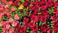 معلومات عن الزهور وانواعها