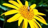 اسماء النباتات الطبيعية