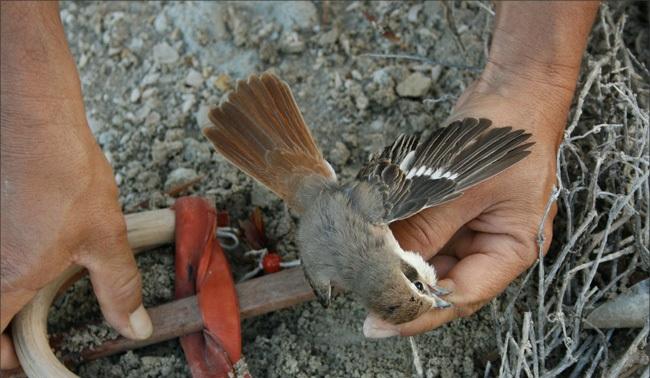 اسهل طريقة لصيد العصافير