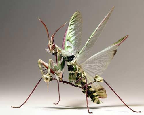 معلومات عن الحشرات بالصور