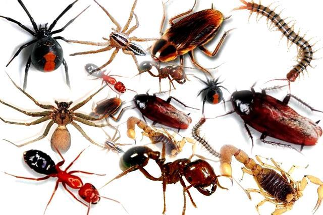 انواع الحشرات المنزلية بالصور