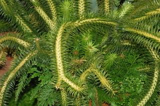 بحث عن النباتات مع الصور