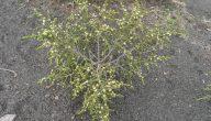 انواع النباتات الطبيعية