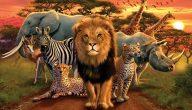 حيوانات افريقيا البرية