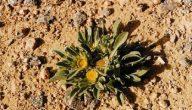 موسوعة النباتات البرية