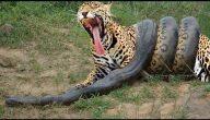 جميع الحيوانات المفترسه