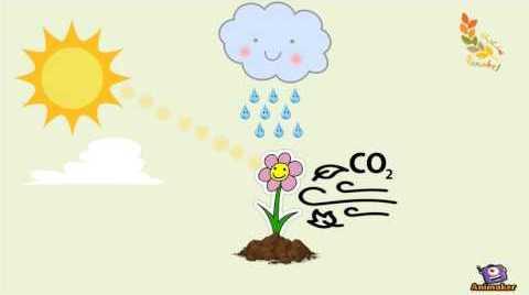 موضوع عن النباتات للاطفال