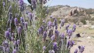 انواع النباتات الطبيعية في المملكة