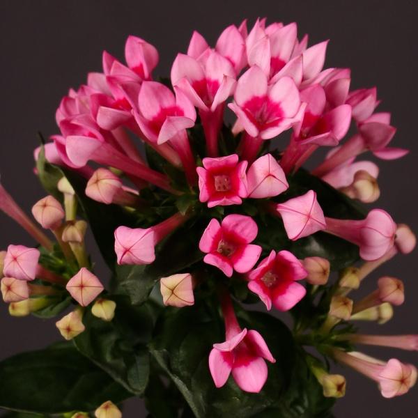 انواع الزهور بالصور والاسماء مفهرس