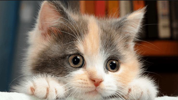 كيفية تربية القطط الصغيرة