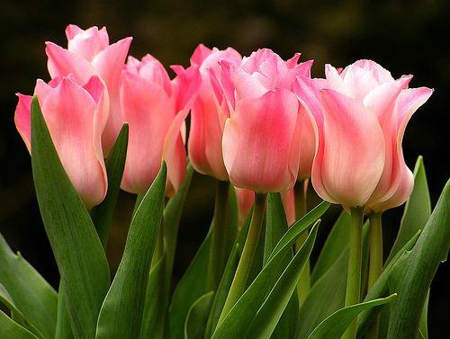 بحث عن الازهار