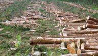 كيفية استغلال الموارد الطبيعية