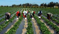 انواع الزراعة