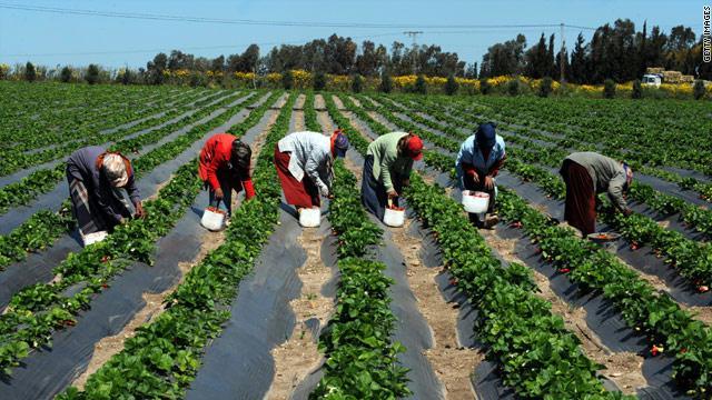 اهمية الزراعة