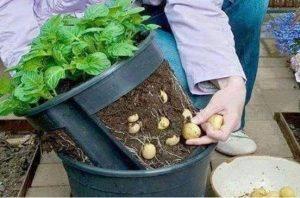 الزراعة في المنزل