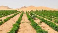 انواع الزراعة في الوطن العربي