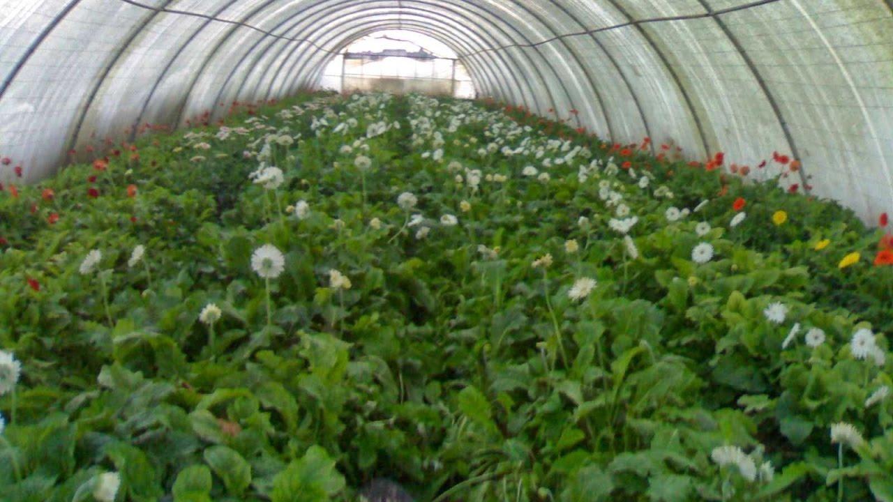 تطور الزراعة