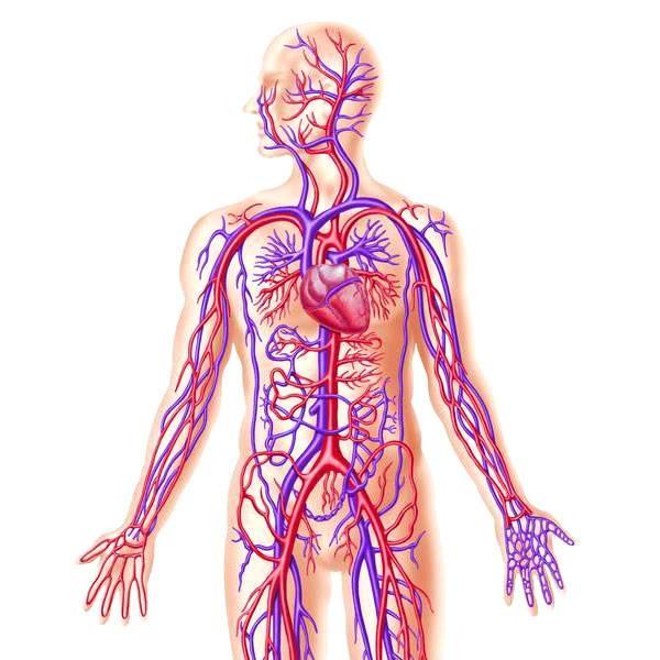 اماكن الاعصاب في جسم الانسان