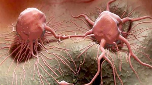 علاج مرض السرطان بالاعشاب