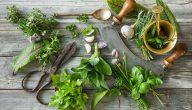 علاج امراض الجهاز الهضمي بالاعشاب